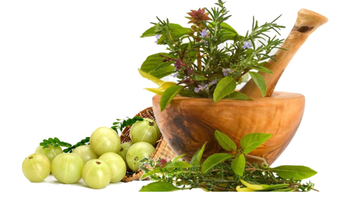 Ayurvedic & Herbal Health Supplement Manufacturer and Supplier in Bangalore