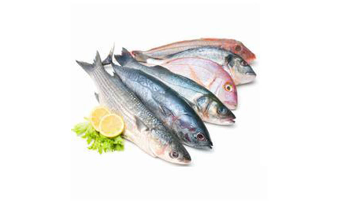Marine Food Supplies Manufacturer and Supplier in Bangalore